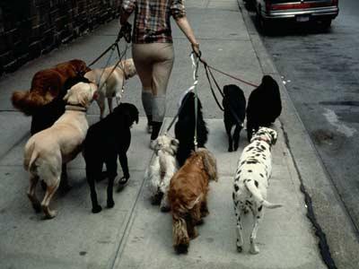 Dogsitter stuttgart