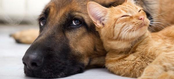 crisi-animali-domestici