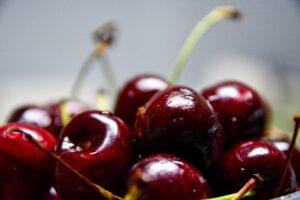 coltivazione ciliegie