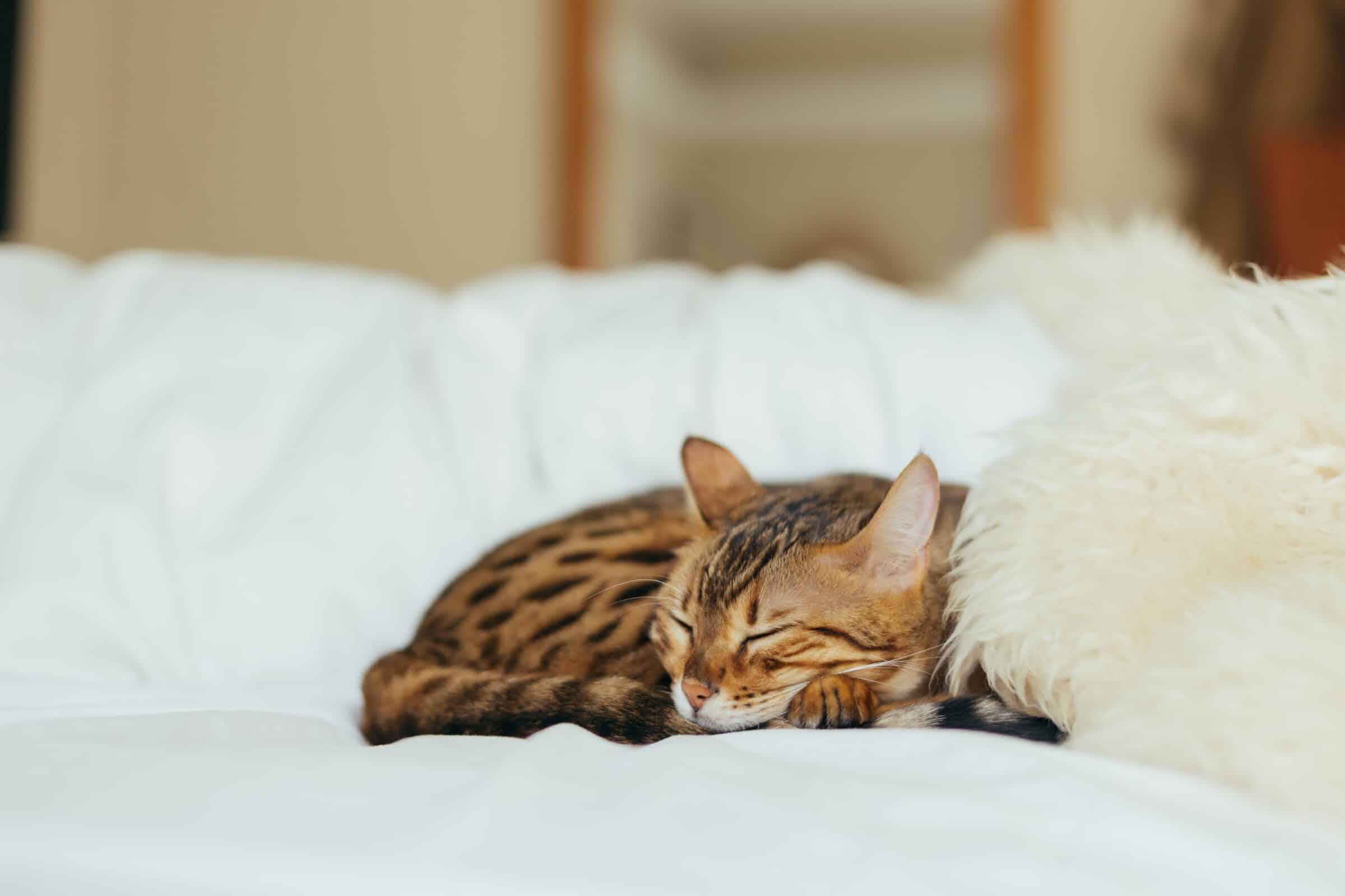 Dormire Bene Per Lavorare Meglio Bianco Lavoro Magazine