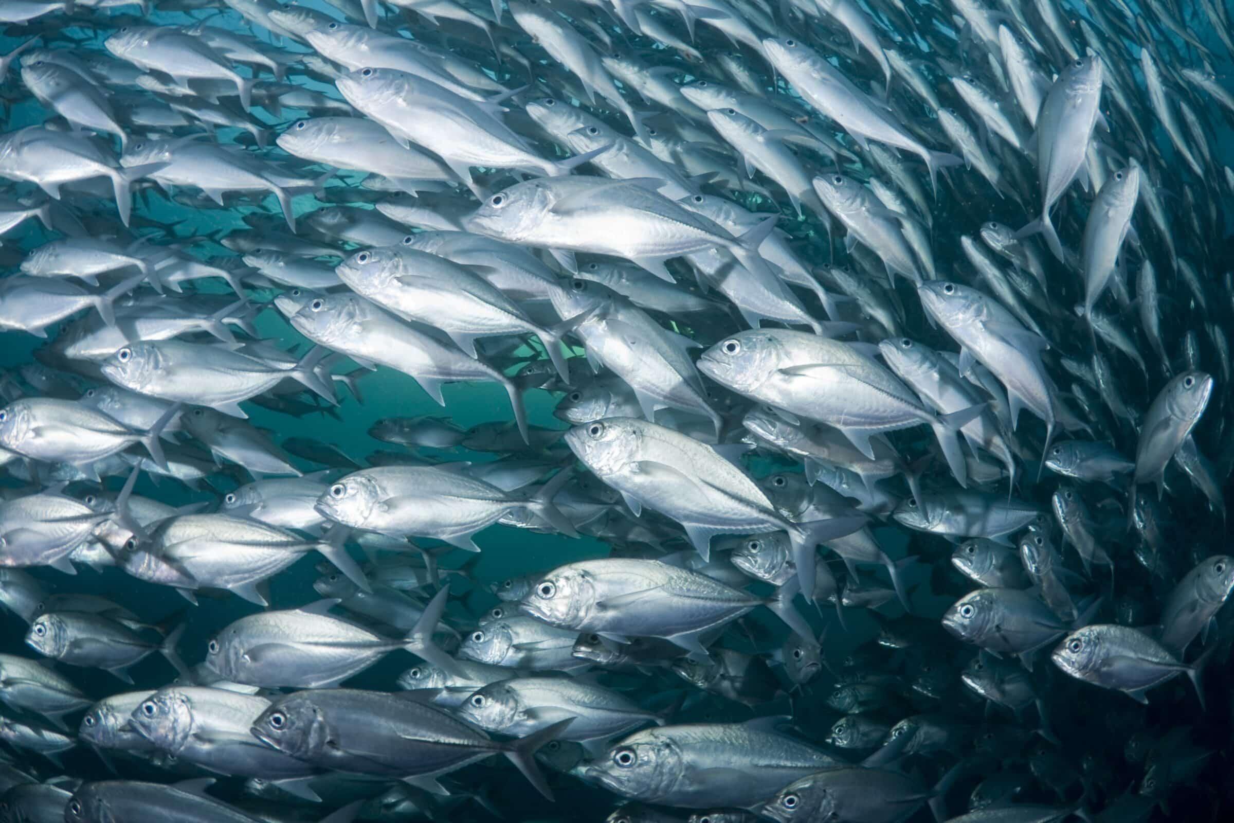 allevamento ittico