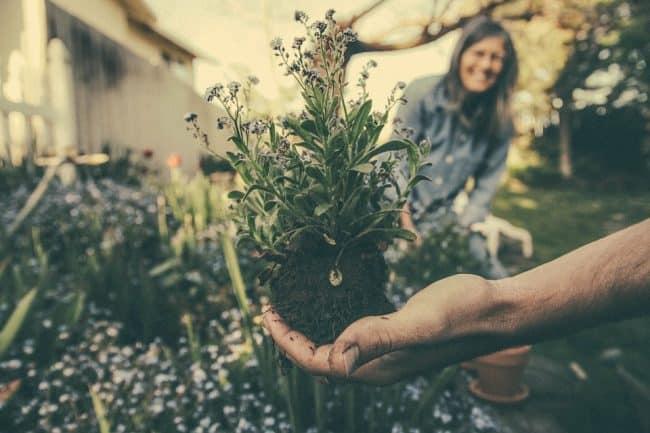 lavorare come giardiniere