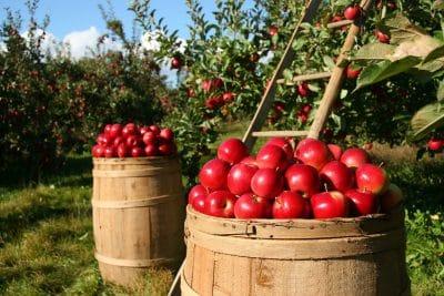 L'agricoltura e le aree rurali