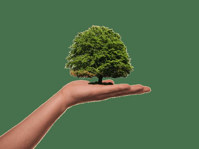 laurea green economy