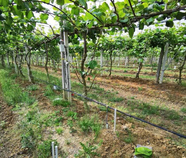 intelligenza artificiale agricoltura
